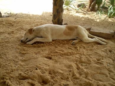 Mayor of Njamena's Dog